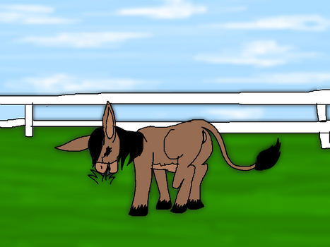 Donkey Virus Tf 7
