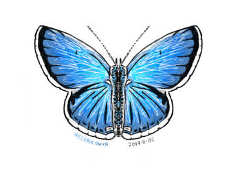 Digital Butterfly by GwyniesArt
