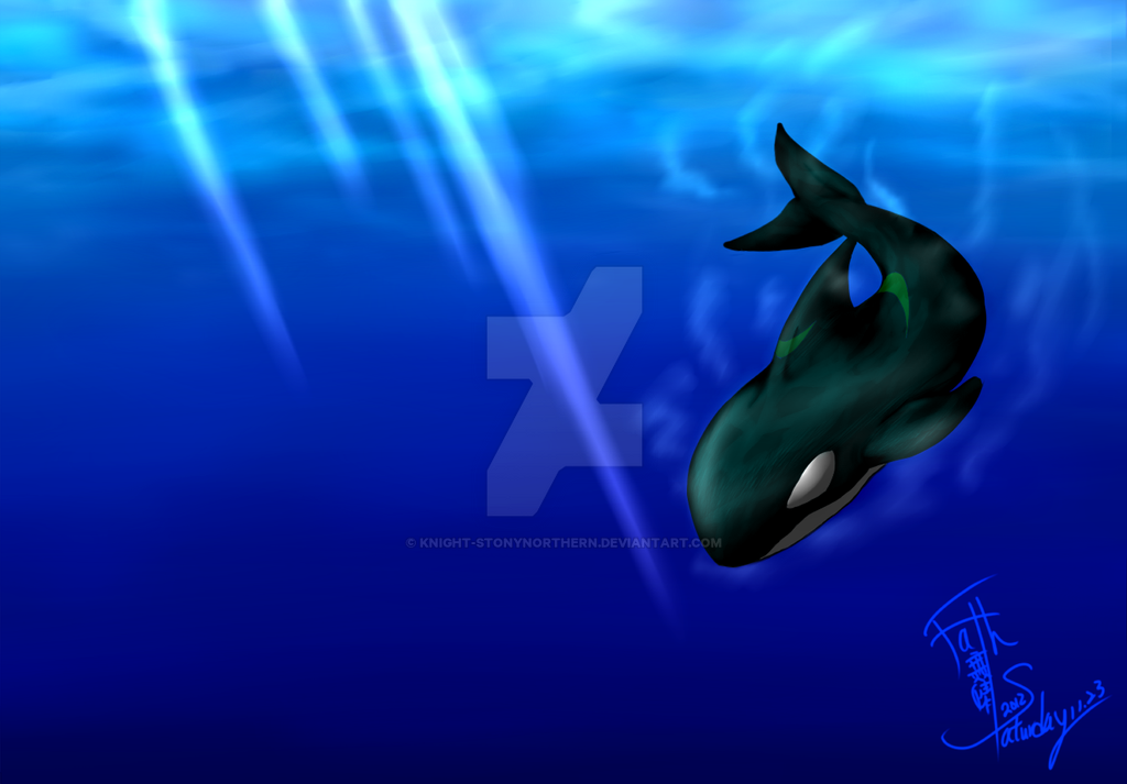 Killer Whale by Knight-StonyNorthern