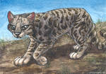 Andean cat ACEO by lynxfang-art