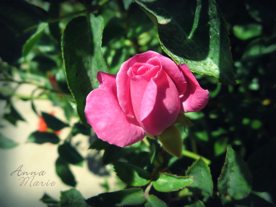 Beauty in miniature by AnnaM157