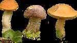 Mushrooms PNG by Sareth27