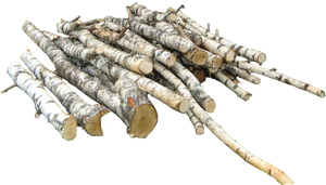 Birch-wood PNG
