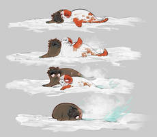 Tododeku seals and global warming