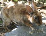 Little bunny by flippytiger