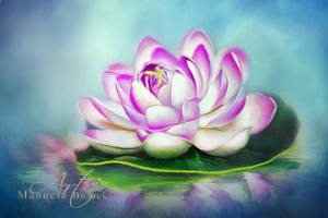 Painted water lily by manuelabusack