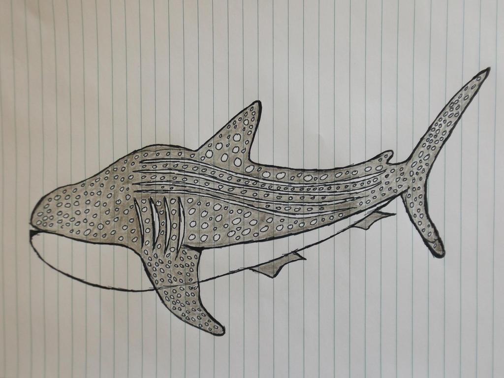 Whale Shark by Coshea90