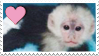 Stamp- Capuchin 1 by IsabellaPrice