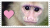 Stamp- Capuchin 2 by IsabellaPrice