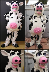 Cow 2004 and 2016
