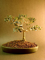 Bonsai Stock by Lostfiniel