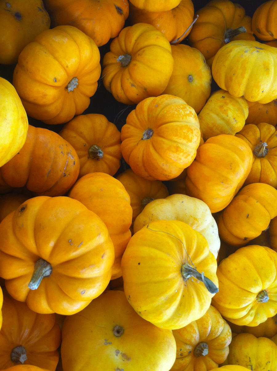 pumpkins 6 by pumpkinflavoredpaint