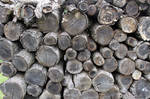 Wood-Stock1 by Stock-Tography