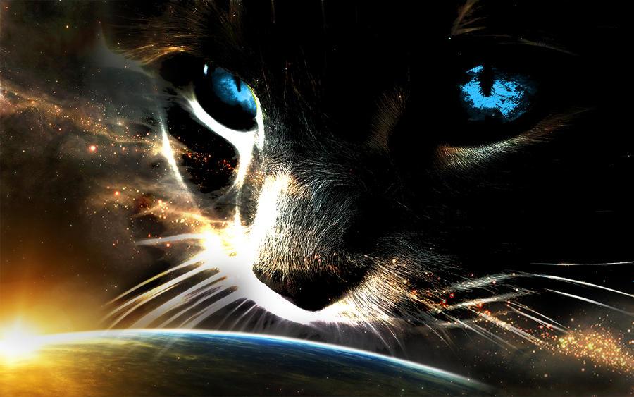 http://fc08.deviantart.net/fs71/i/2012/240/f/e/mr_kitteh_universe_by_siphen0-d5ct28x.jpg