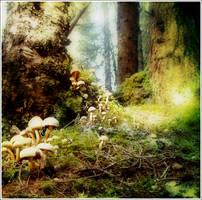 Mushrooms by Grevenpop