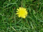 Stock: Yellow Flower