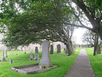 Stock: Cemetery 2
