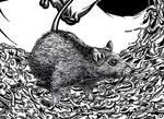 Spray Poster Detail Rat