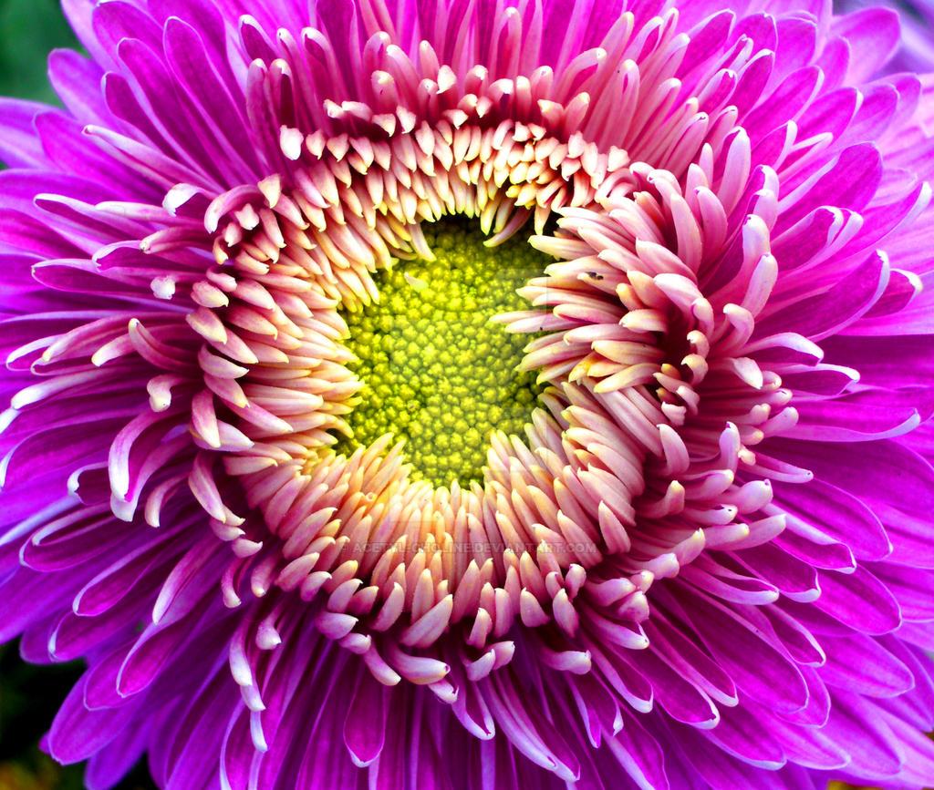 The Purple Beauty