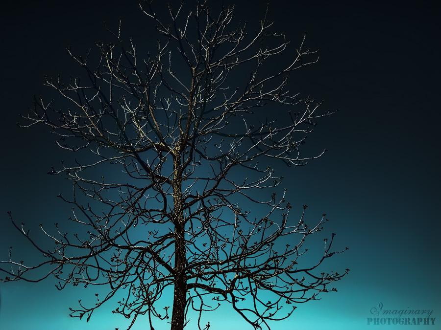Silent Night by Imaginary-Night