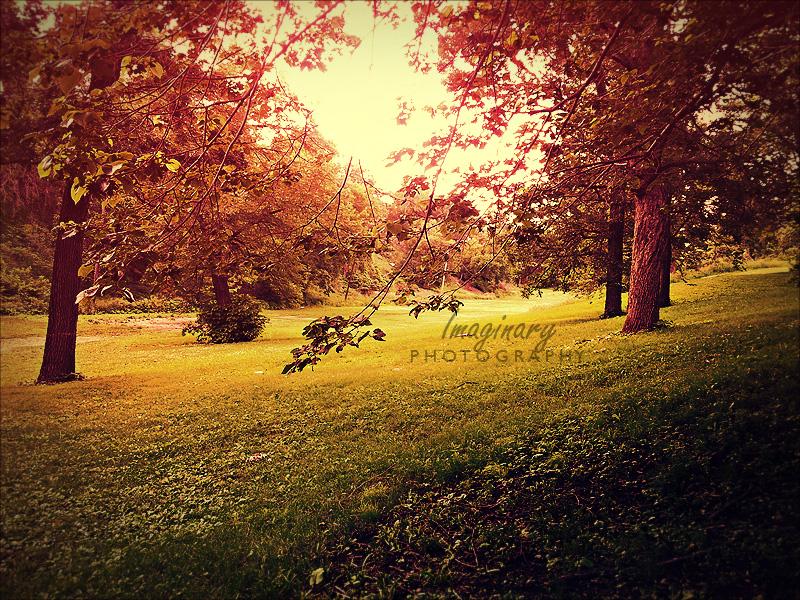 Early Fall by Imaginary-Night