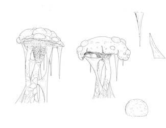 Grey Meadows mushrooms