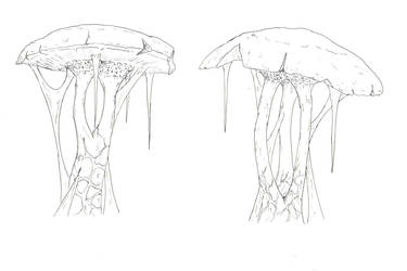 Grey Meadows Mushrooms2