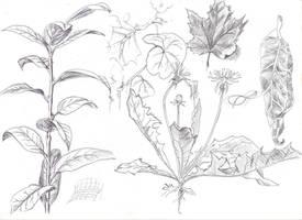 plants XD