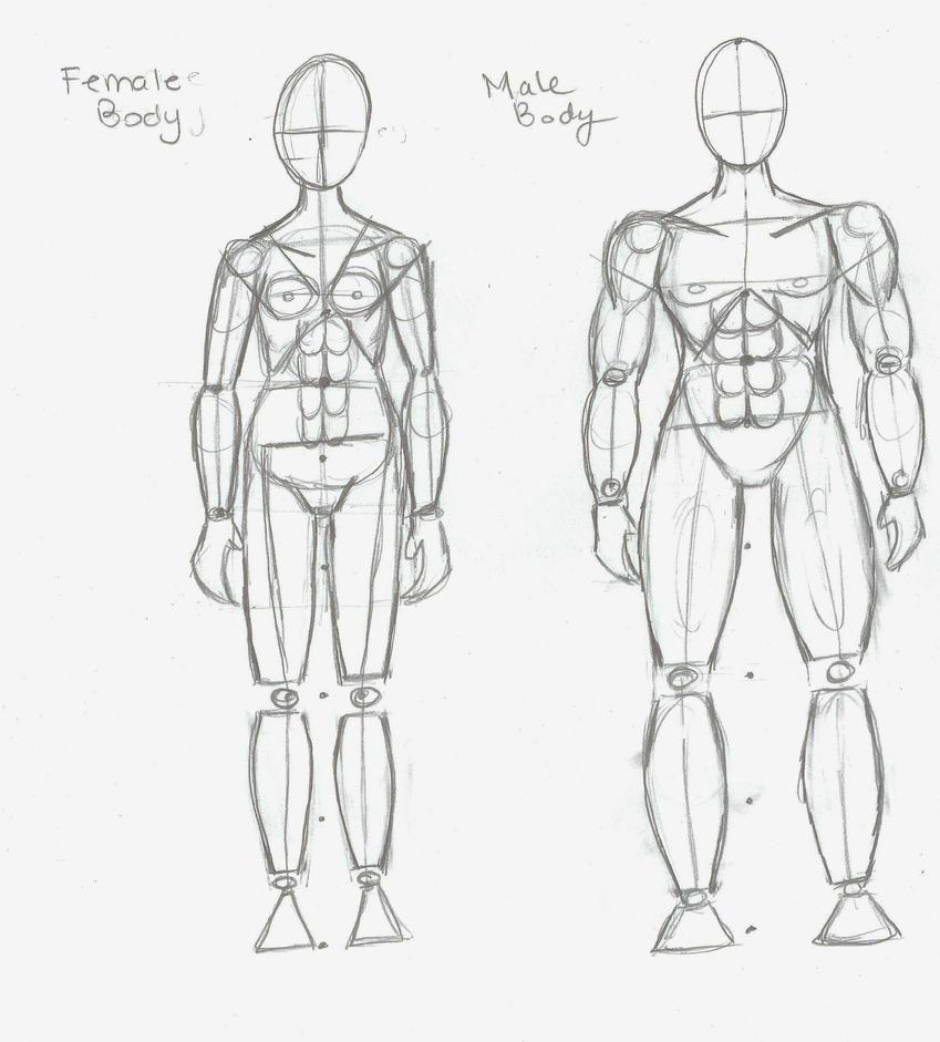 Female n Male Anatomy Tutorial by Tblondie1826 on DeviantArt