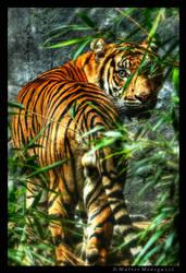 Sumatran Tiger by colpewole