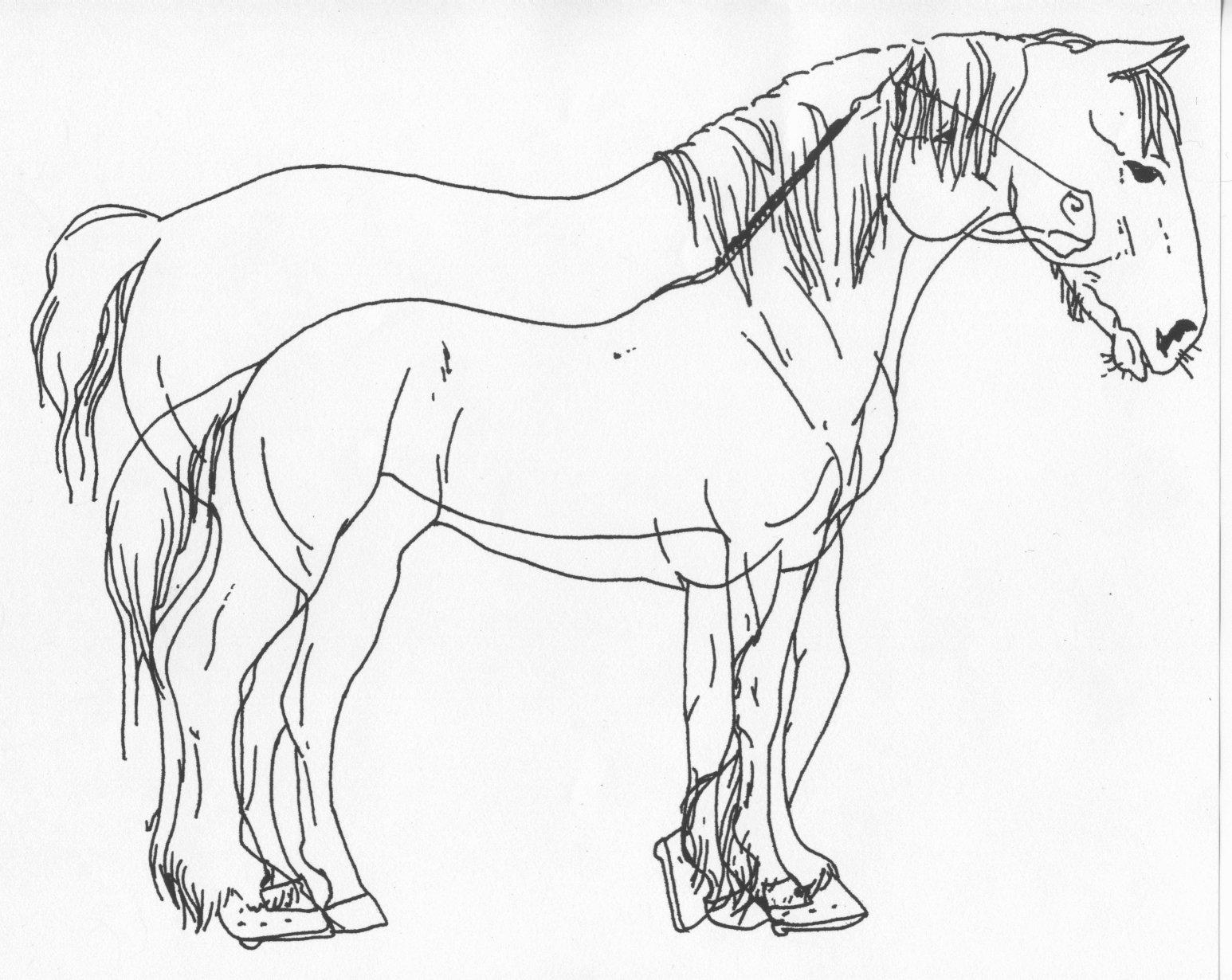 How To Draw A Draft Horse | Solution for how to for dummies