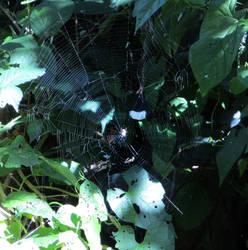 Spider September Sun by deepblank
