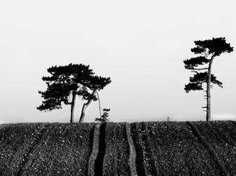 two pines by SeanCatt