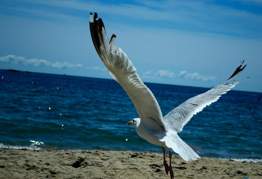 Freedom by bozonio