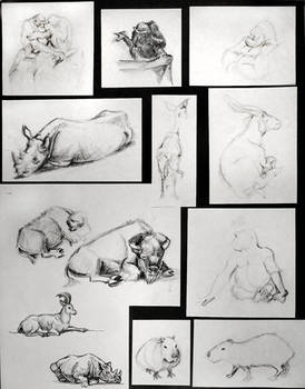 Zoo Drawings2