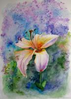 Lilium by Afinodora