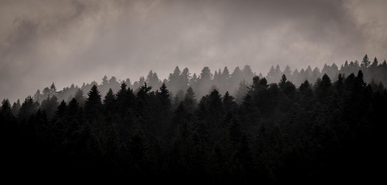 Amidst Foreverdark Woods by LunaGothix