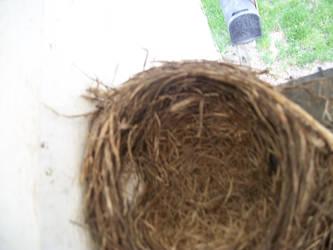 Empty Nest by DanDrazen