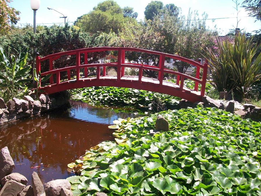 El Edén Que Conocí: Mini Jardín Botánico en Las Flores (Provincia de ...