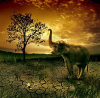 save our wild life