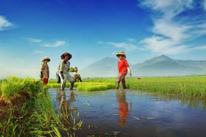 Indonesian farmer by nooreva