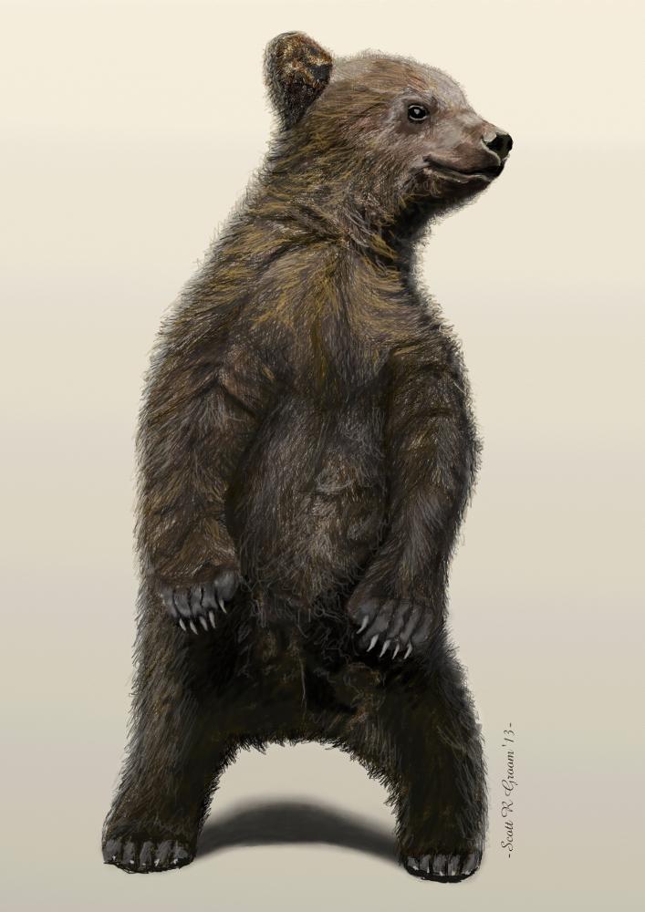 Curious Little Bear Cub
