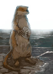 Furry Water Mouse