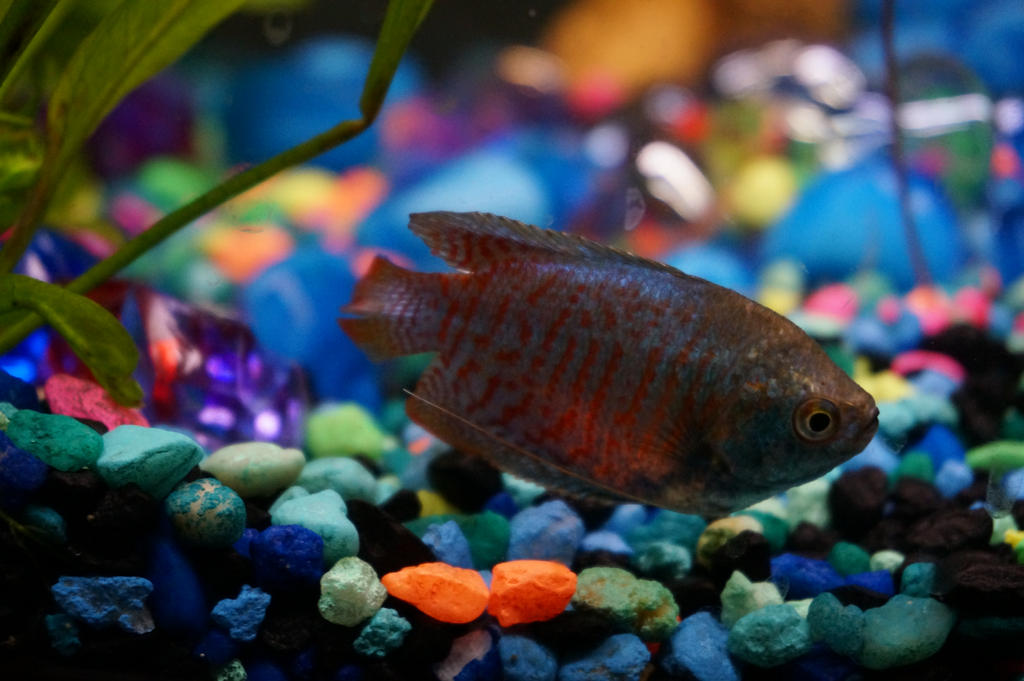 Fish tank 042013dec03 by wisscout on deviantart for Fish tank camera