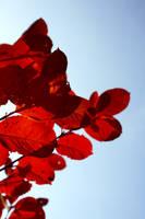 autumn by mfknprincess