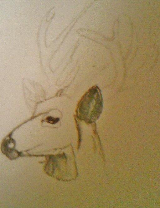 Deer by reaper222ofdarkness