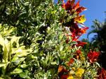 Plants II