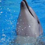 Playful dolphin by BubbleCloud