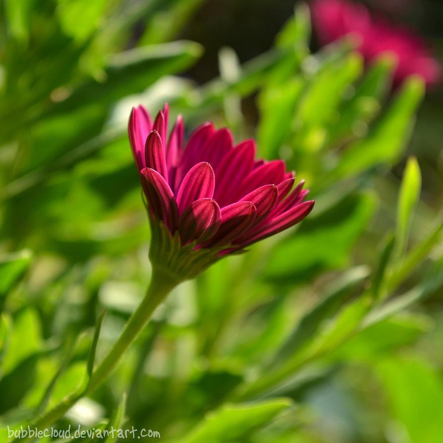 Sunny Purple