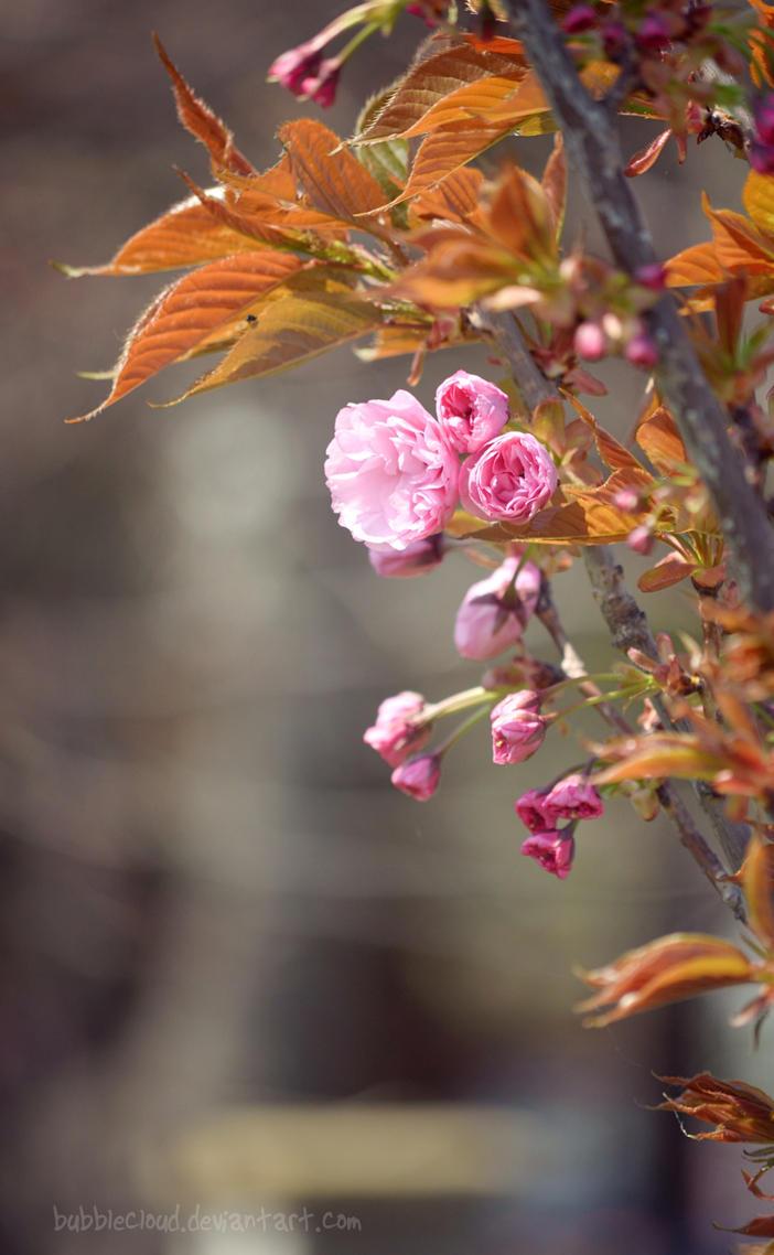 Sweet pink by BubbleCloud